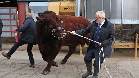 Boris Johnson walking a bull during a visit to Darnford Farm in Banchory near Aberdeen. Photograph: