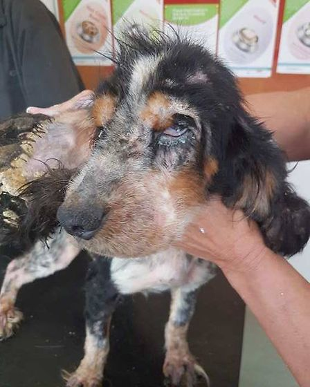 Wanda was in a terrible state when she was first picked up by Ravenswood Pet Rescue