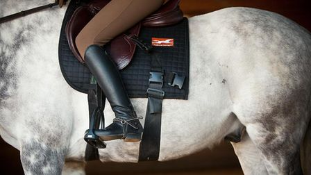 Researchers observed horses ridden with elastic bands attached to the saddle. Picture: Royal Veteri