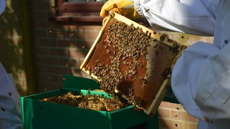 Scouts in Welwyn are caring for two honeybee hives.