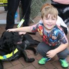 Dilan Bates, 5 at the guide dogs stand at Animal Crackers event in Hatfield. Picture: Danny Loo