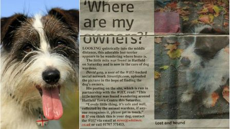 Left: Spike. Picture credit: Mark Lampert. Right: Spike's appeal in the Wekwyn Hatfield Times in 201