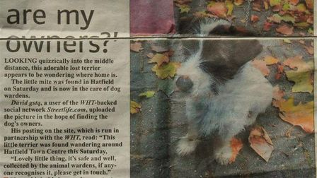 The Welwyn Hatfield Times article from 2012 after Spike was found in Hatfield town centre.