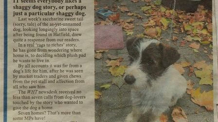 The Welwyn Hatfield Times article published after Spike was offered seven homes.