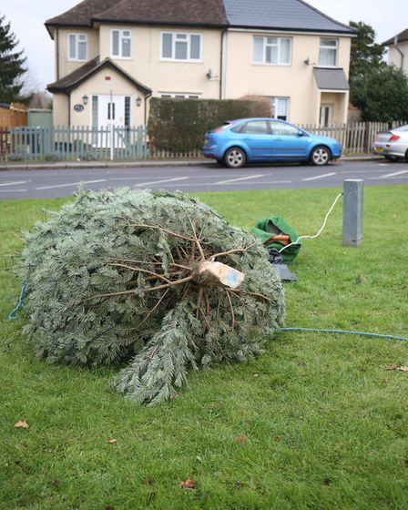 Vandals have chopped down the community Christmas tree in South Mimms. Picture: Danny Loo