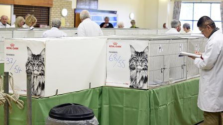 Exotic cat show at Tilney St Giles community centre. The shows began in 1996 organised by Barbara an