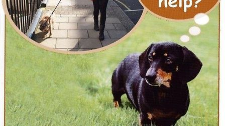 The Cinnamon Trust are urgenlty looking for a dog walker in Emneth to take out dogs while thier owne