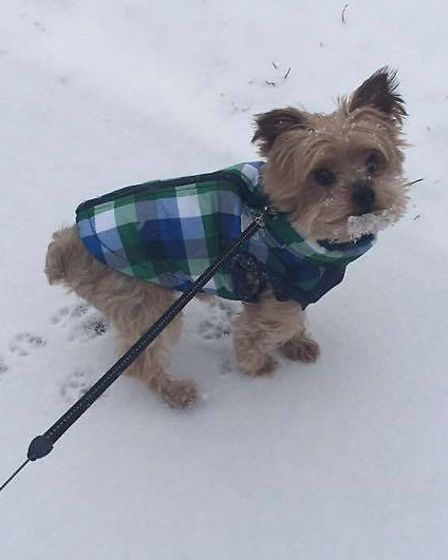 Extreme weather is just another fashion opportunity for stylish Toby in Hatfield. Picture: Natalie C