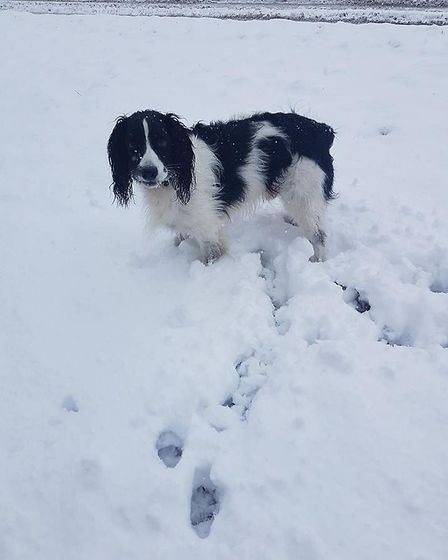 Here's Toby enjoying the snow in Hillyfields. Picture: Elaine Hornsey