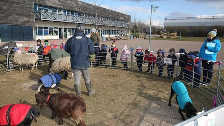 Reception class of Howe Dell School meet some farm animals from Ark Farm. Picture: Danny Loo