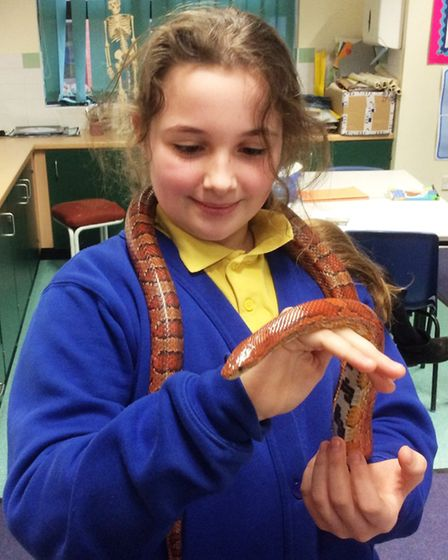 Grace Height and her pet corn snake, Jasper | Pupils at Anthony Curton Primary School in Walpole St