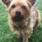 RSPCA Southridge Find Me a Home: Dilly the dog