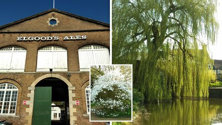 Elgoods Brewery in WIsbech are preparing for the 2018 season, as well extending opening times and ad