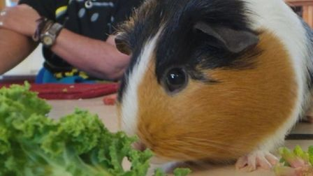 People and Animals UK hope to set up a community farm and therapy base in Wisbech with the help of L