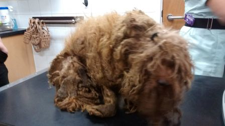 Dog found dumped by a roadside at Eye near Peterborough was in such a state vets shaved off 1.2kg of