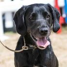 Dogfest cancelled in bid to keep pooches safe.