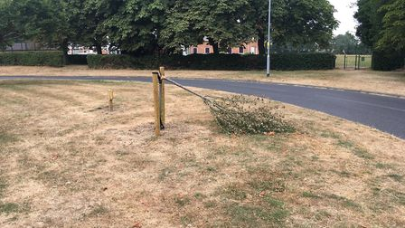 Snapped tree in Hatfield. Picture: Alan Davies.