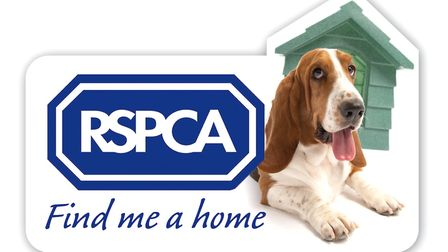 RSPCA Find Me A Home