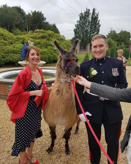 Pharaoh the llama, of Faster Lente Llamas, was the special guest at a Wisbech wedding.