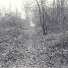 Woodland where Anne Noblett's body was found. Picture: Supplied by Herts Police