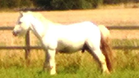 This horse, given the name Houdini by police, fled its field in Sealey's Lane, Parson's Drove, so of