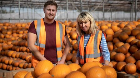 Tesco predicts sales of two million pumpkins this Halloween, as growers report bumper harvest. The p