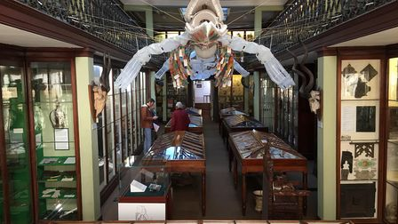 Inside the Wisbech and Fenland Museum. Picture: HARRY RUTTER