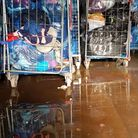 Volunteers helping Isabel Hospice clear their flooded warehouse. Picture: supplied by Isabel Hospice