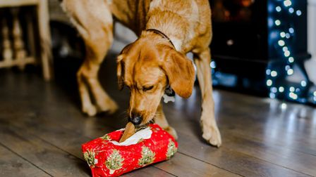 Homeless animals will be getting a proper Christmas dinner thanks to Kimpton's Blue Cross rehoming c