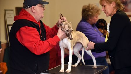 Nearly 500 was raised for STEM cell research at a charity dog show in Walton Highway on Saturday, Ja