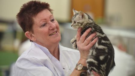 Cat show at Tydd St Giles. Nicky Butler Picture: IAN CARTER