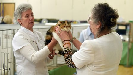 Cat show at Tydd St Giles. Caroline turner-Russell Picture: IAN CARTER