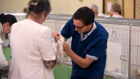 Cat show at Tydd St Giles.Vet James Alexander Picture: IAN CARTER
