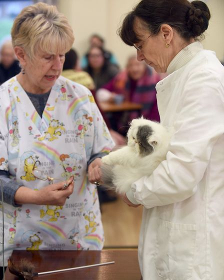 Cat show at Tydd St Giles. Rosemary Fisher and Caroline Turner-Russelll Picture: IAN CARTER