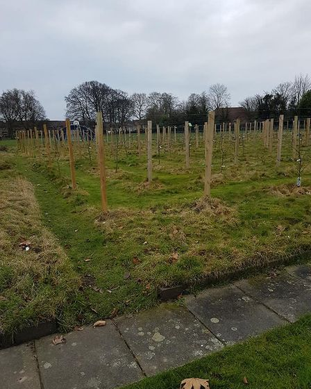 Fifteen trees have been stolen from the community orchard in Wisbech Park. Picture: ALAN WHEELDON.