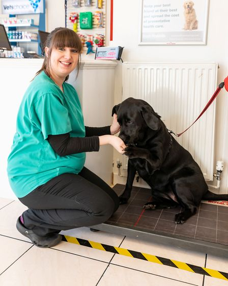 A large labrador from Emneth who struggled to walk has shed more than a third of her weight after di