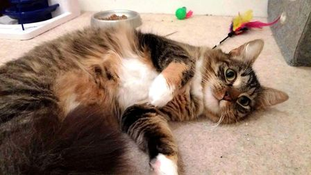 Princess McFluff is a three-year-old, spayed, tabby and white female in the care of Cat Welfare Wisb
