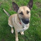Can you provide Cola the dog with a new home?