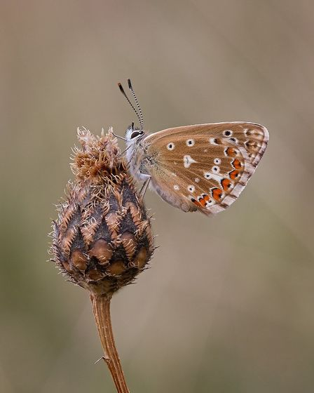 Adonis Blue by Neil Malton, past president of the Peterborough Photographic Society, who gave a talk