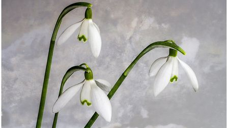 Pat Atter. Spring. Wisbech and District Camera Club competition entry. Picture: