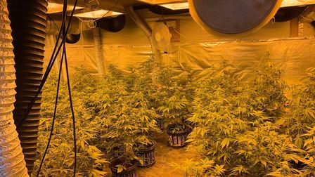 302 cannabis plants were seized on Mondy April 29 from two addresses in Parson Drove and Wisbech St