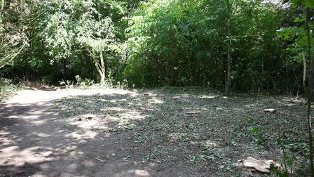 Poplar trees were felled in Moneyhole park by accident on a footpath by Wyton & Leysdown. Picture: D