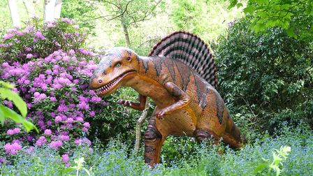One of the 72 life-size dinosaurs in the Wilderness Gardens at Knebworth House. Picture: Knebworth E