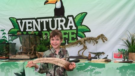 Dino Adventure at Knebworth House. Picture: Knebworth Estate