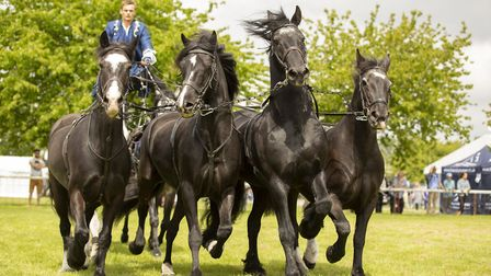 Atkinson Action Horses will be in action at the Hertfordshire County Show