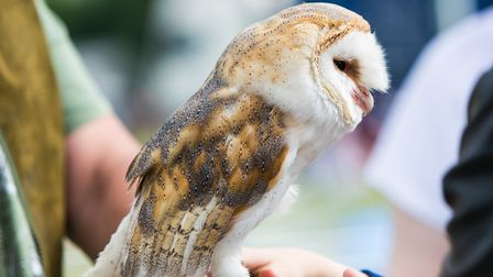 See birds of prey at the Hertfordshire County Show. Picture: Richard Washbrooke