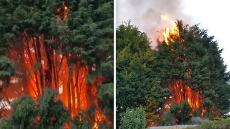 The large fire was filmed ripping through the huge tree on Cherry Road in Wisbech. Picture: MICHELLE