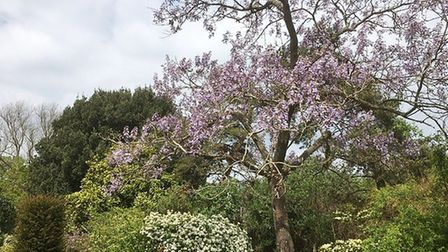 Beautiful nine acre garden in Elm to be open to the public on July 14. Picture: DIANA BULLARD