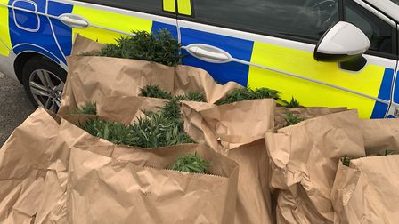 103 cannabis plants were discovered by police in Wisbech today. The plants were found by officers wh