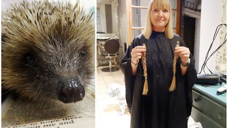 A three day fundraiser for a hedgehog sanctuary in Walpole St Peter raised more than £500 alongside